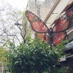 Mariposas de Florida